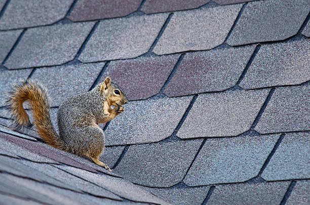 squirrels online
